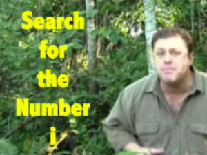 Search for The Number i